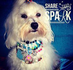 #dogs #maltese #perros #frases