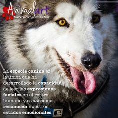 Capacidades caninas #perros #mascotas #pets
