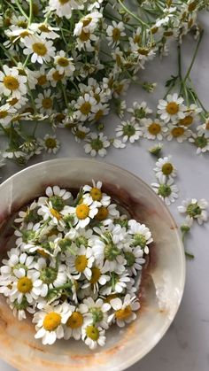 Chamomile Flowers – Best Home Plants Cocktail Videos, Wine Gift Baskets, Basket Gift, Orchid Care, Flower Aesthetic, Health Remedies, Garden Landscaping, Planting Flowers, Beautiful Flowers