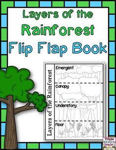 Sweet image for layers of the rainforest printable