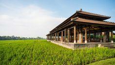The Restaurant overlooks the rice paddy fields of Tanah Gajah Estate - The Chedi Club Tanah Gajah, Ubud, Bali