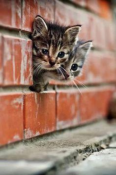 .bellos gatitos