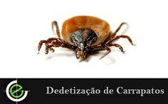 Dedetização de Carrapatos em São Paulo, é com a Exterminex, Confira!