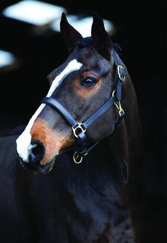 @ JulisPage @ JulisPage – – - Art Of Equitation Cute Horses, Pretty Horses, Horse Love, Beautiful Creatures, Animals Beautiful, Cute Animals, Horse Photos, Horse Pictures, Cavalo Wallpaper