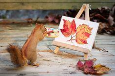 Fotos, nozes e esquilos simpáticos!