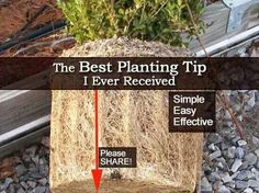 Root bound plant tip.
