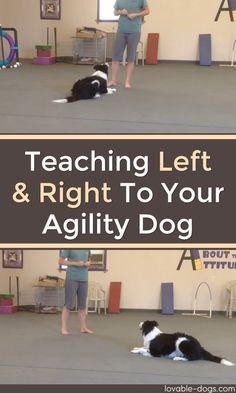 Teaching Left And Right To Your Agility Dog►►http://lovable-dogs.com/teaching-left-and-right-to-your-agility-dog/?i=p