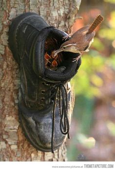 Just a boot nest…