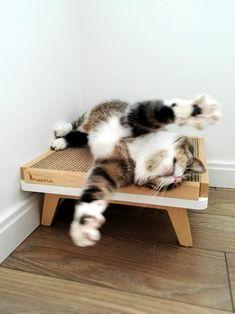Have some fun on Scratch Pad! Kitsch, Cat Climber, Cat Perch, Cat Shelves, Cat Accessories, Cat Supplies, Cat Furniture, Diy Stuffed Animals, Cute Baby Animals