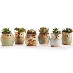 Glaze Base Serial Set Succulent Plant Pot Cactus Plant Pot Flower Pot Container Planter Bonsai Pots with A Hole Perfect Gift Idea 6 in Set. Small Flower Pots, Flower Planters, Potted Flowers, Cactus Flower, Flowers Garden, Cactus Plant Pots, Planter Pots, Ceramic Planters, Planting Succulents