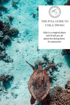 Today's post will tech you everything you need to know about SCUBA diving in Utila, Honduras