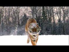 De WNF-commercial 'Ik ben geen vloerkleedje' is, mede dankzij jullie, door naar de volgende ronde van de Gouden Loeki! Help de tijgers om in de top 5 te komen. Stem (nogmaals) op onze commercial: klik op de pin!