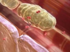 Cellular Respiration [up to before citric acid cycle] A movie produced for Lippincott Williams & Wilkins while working at Animated Bio-Medical in Sydney. Cell Biology, Ap Biology, Teaching Biology, Science Biology, Science Education, Life Science, Teaching Plants, Teaching Tools, Cell Respiration