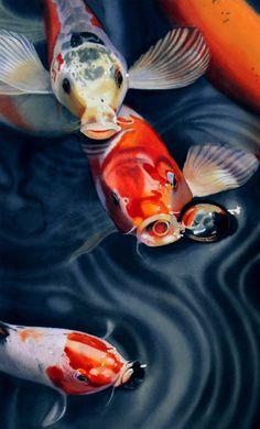 Feeding frenzy canvas print / canvas art by denny bond koi painting, watercolour painting, Art Koi, Fish Art, Koi Painting, Watercolour Painting, Fish Paintings, Watercolors, Watercolor Fish, Koi Fish Pond, Japanese Koi