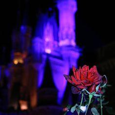 Instagram【risaboten_usaboten】さんの写真をピンしています。 《・・ 🏰🌹 薔薇がちょっと枯れ始めてた…。 #tokyodisneyresort #tokyodisneyland #disneyview #cinderellacastle #nightview #rose #redroses #disneygram #disneypic  #canon #eos8000d #東京ディズニーリゾート #東京ディズニーランド #シンデレラ城 #薔薇 #赤い薔薇  #夜景 #ディズニー写真部  #写真好きな人と繋がりたい #ファインダー越しの私の世界 #ファインダーは私のキャンパス》