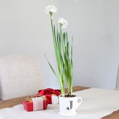 Potted Paperwhites holiday or hostess gift