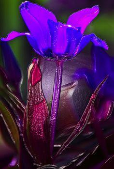 ~~ Alien Plant Life 14 ~~