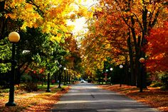 Brant Road, Cambridge, Ontario in the Fall.