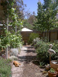 Guess the warmest spot Garden inspiration using Australian native plants Dry Garden, Garden Shrubs, Garden Landscaping, Australian Native Garden, Australian Plants, Garden Structures, Garden Inspiration, Garden Ideas, Native Plants