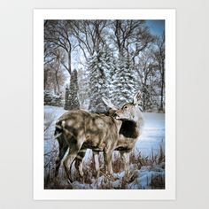 Two deer nuzzling and cleaning each other in the winter snow