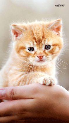 Decent Image Scraps: Animals