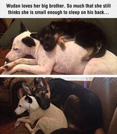Aww dog buddies