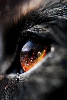 Im Auge des Wolfes.
