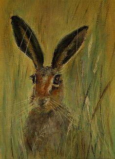 Hare hiding in grass