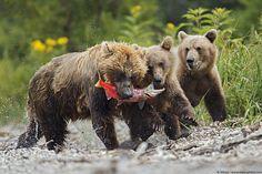 Ultimi scatti ‹ Wildlife and Nature Photography – Marco Mattiussi (Matyu)