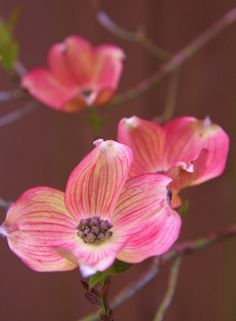 Dogwood Flower. We have one of these in front of our dining room window.