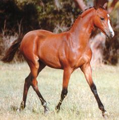 Horse Breeds - Horse Information Fjord Horse, Horse Information, Horse Sketch, Horse Photos, Horse Breeds, Beautiful Horses, Cool Pictures, Arabian Horses, Ponies