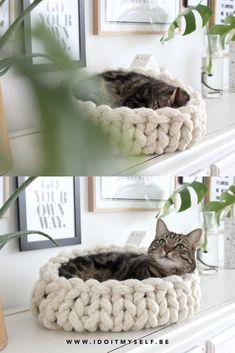 Un joli panier pour votre chat? Fait main en plus? je vous explique la marche à suivre pour créer ce petit DIY pour votre chat! Cat Bedroom, Cat Couple, Pinterest Diy, Cat Supplies, Arm Knitting, Cat Furniture, Pretty Cats, Cat Breeds, Basket