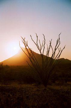 Hermosillo. Sonoran Desert