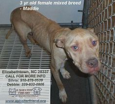ON THE EUTH LIST FOR TUESDAY MORNING 1/21/14. Please CALL to rescue or adopt! Silvia: 910-876-0539 Debbie: 339-832-0806 https://www.facebook.com/photo.php?fbid=10153758710135294&set=a.10153766431570294.1073741960.343515945293&type=3&permPage=1