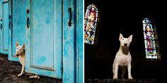 Dog Nextdoor | I believe in DOG
