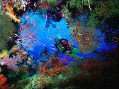 Soft Coral Embellished Cave, Fiji - http://imashon.com/w/soft-coral-embellished-cave-fiji.html