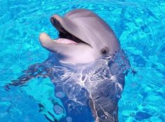 Easy Science for Kids All About Dolphins - The Dogs of The Sea. Learn more about Dolphins with our interesting Kids Science Website on Dolphins! All About Dolphins, Dolphins For Kids, Dolphin Facts For Kids, What Animal Are You, Animals And Pets, Cute Animals, Wild Animals, Fauna Marina, Animal Facts