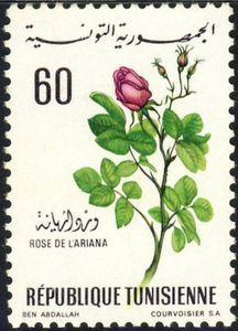 ◇Tunisia  1968 Ariana Rose
