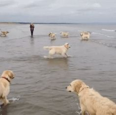 Wow! The dogs play together in the ocean. http://ift.tt/2h95A5u