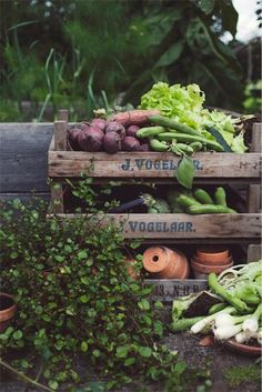 """If I get around to making some wooden crates, I should stencil them with the farm logo, or """"Vegetables"""" or """"Herbs"""" or whatever."""