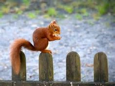 Free squirrel HD Wallpapers - Bing Images
