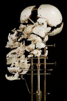 exploded skull