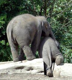 A helping trunk, how precious.
