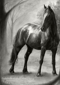 Hey, I found this really awesome Etsy listing at https://www.etsy.com/listing/160322236/horse-print-of-graphite-pencil-drawing