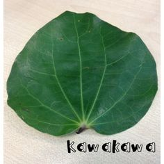 Kia ora koutou - who has tried kawakawa before? How do you use your kawakawa? Kawakawa leaves have traditionally been used for their… Oras, Tatt, The Cure, Plant Leaves, Medicine, Cold, Healthy, Nature, Plants