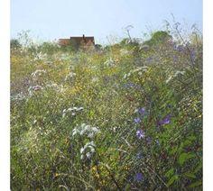 Paul Evans - Meadow Flowers and Farm