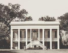 Moss & Marsh....Bocage Plantation, Louisiana