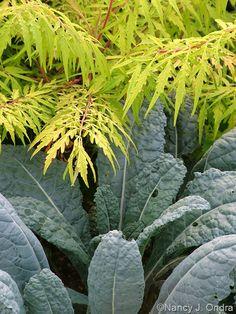 Rhus typhina 'Bailtiger' (Tiger Eyes) and Kale 'Nero di Toscana' ('Lacinato')
