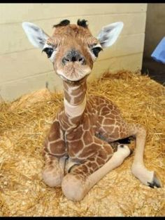 omg... I <3 Giraffes! by Ali Cat