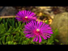 Цветы - это рай на земле!